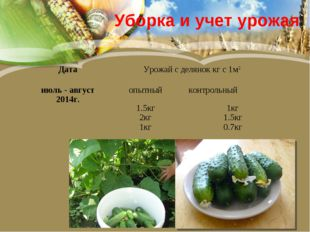 Уборка и учет урожая ДатаУрожай с делянок кг с 1м2 июль - август 2014г.опы