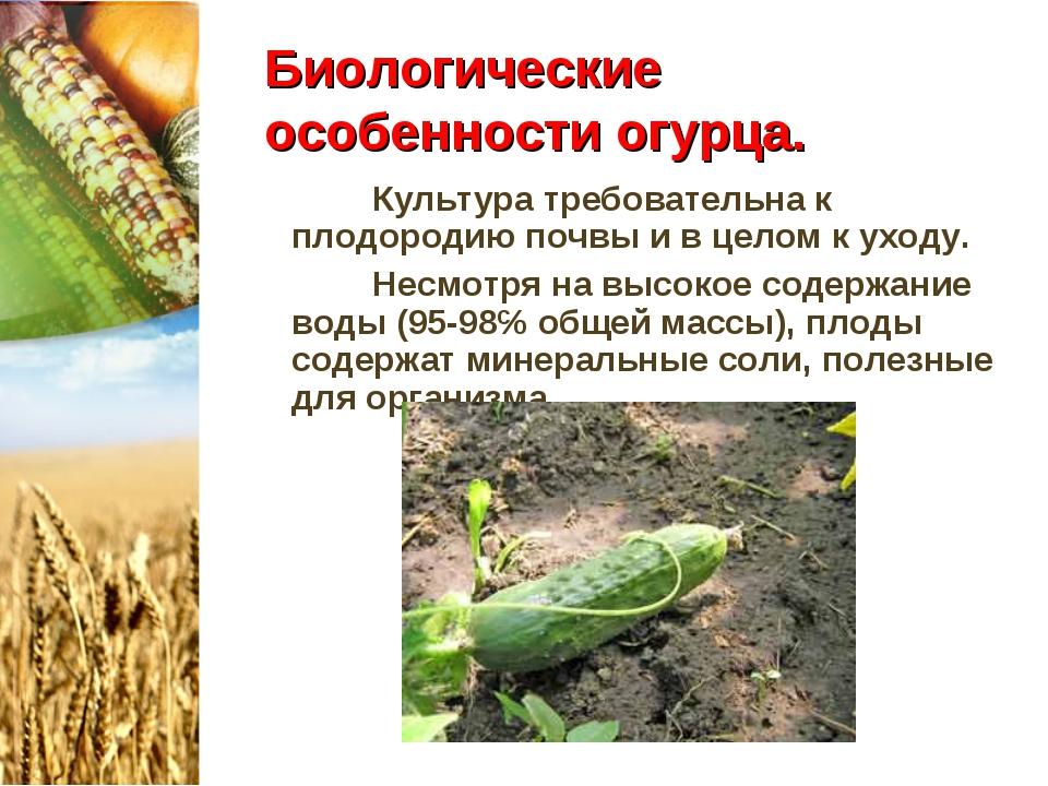 Биологические особенности огурца. Культура требовательна к плодородию почвы и...