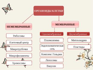 ОРГАНОИДЫ КЛЕТКИ НЕМЕМБРАННЫЕ МЕМБРАННЫЕ Одномембранные Двумембранные Рибосом