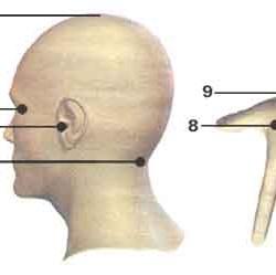 Точки для массажа при насморке