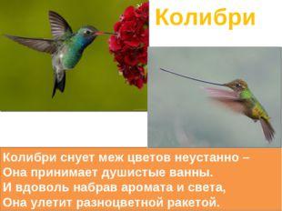 Колибри Колибри снуетмеж цветов неустанно – Она принимает душистые ванны. И