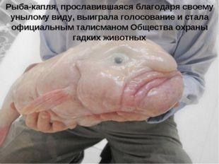 Рыба-капля, прославившаяся благодаря своему унылому виду, выиграла голосовани