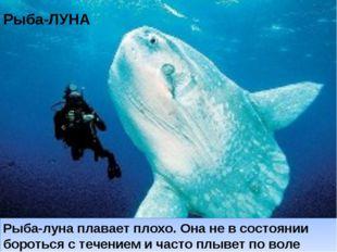 Рыба-ЛУНА Рыба-луна плавает плохо. Она не в состоянии бороться с течением и ч