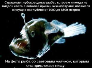 На фото рыба сo световым маячком, которым она привлекает пищу. Страшные глу