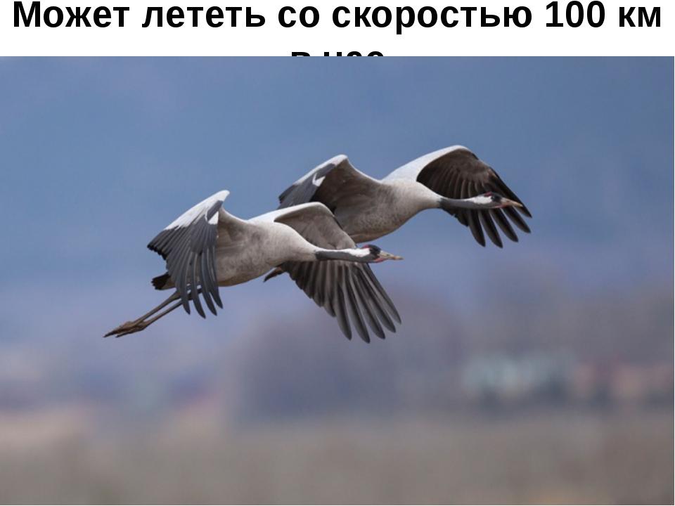 Может лететь со скоростью 100 км в час