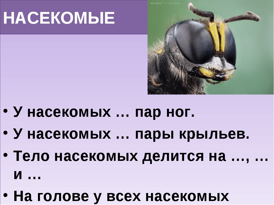 НАСЕКОМЫЕ У насекомых … пар ног. У насекомых … пары крыльев. Тело насекомых д...