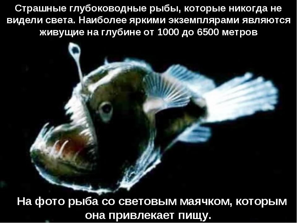 На фото рыба сo световым маячком, которым она привлекает пищу. Страшные глу...