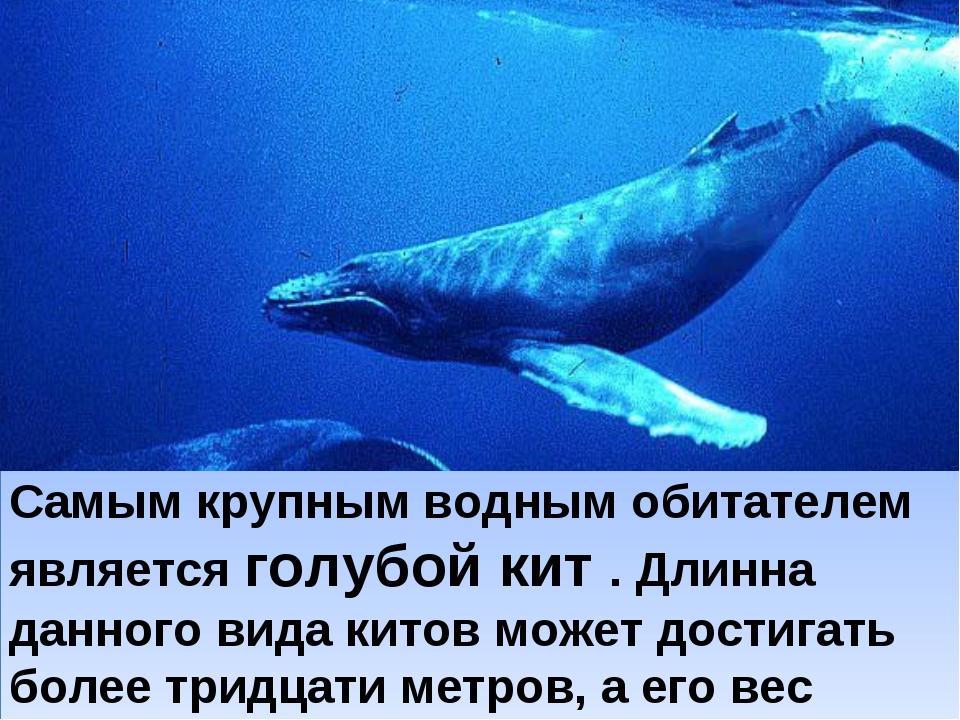 Самым крупным водным обитателем является голубой кит . Длинна данного вида ки...