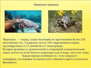 Животное черепаха Черепахи — отряд, существующий на протяжении более 220 мил