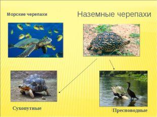Морские черепахи Сухопутные Наземные черепахи Пресноводные