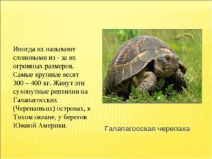Галапагосская черепаха Иногда их называют слоновыми из - за их огромных разме