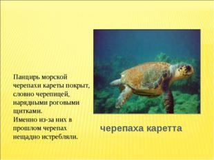 черепаха каретта Панцирь морской черепахи кареты покрыт, словно черепицей, на