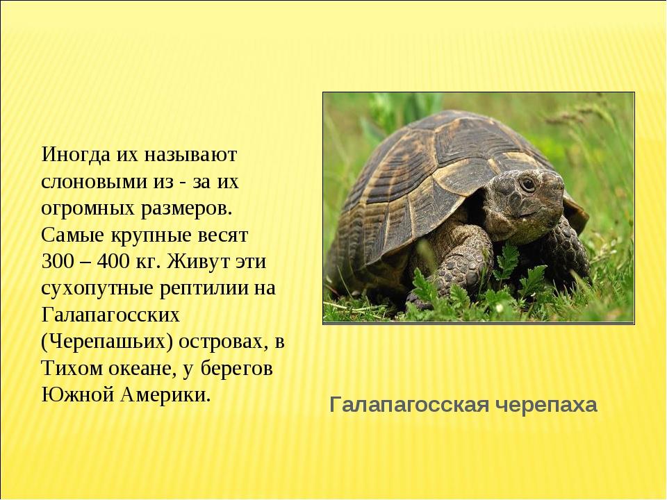 Галапагосская черепаха Иногда их называют слоновыми из - за их огромных разме...