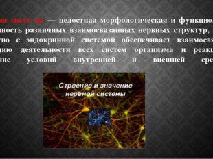 Не́рвная систе́ма — целостная морфологическая и функциональная совокупность р
