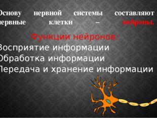 Основу нервной системы составляют нервные клетки – нейроны. Функции нейронов: