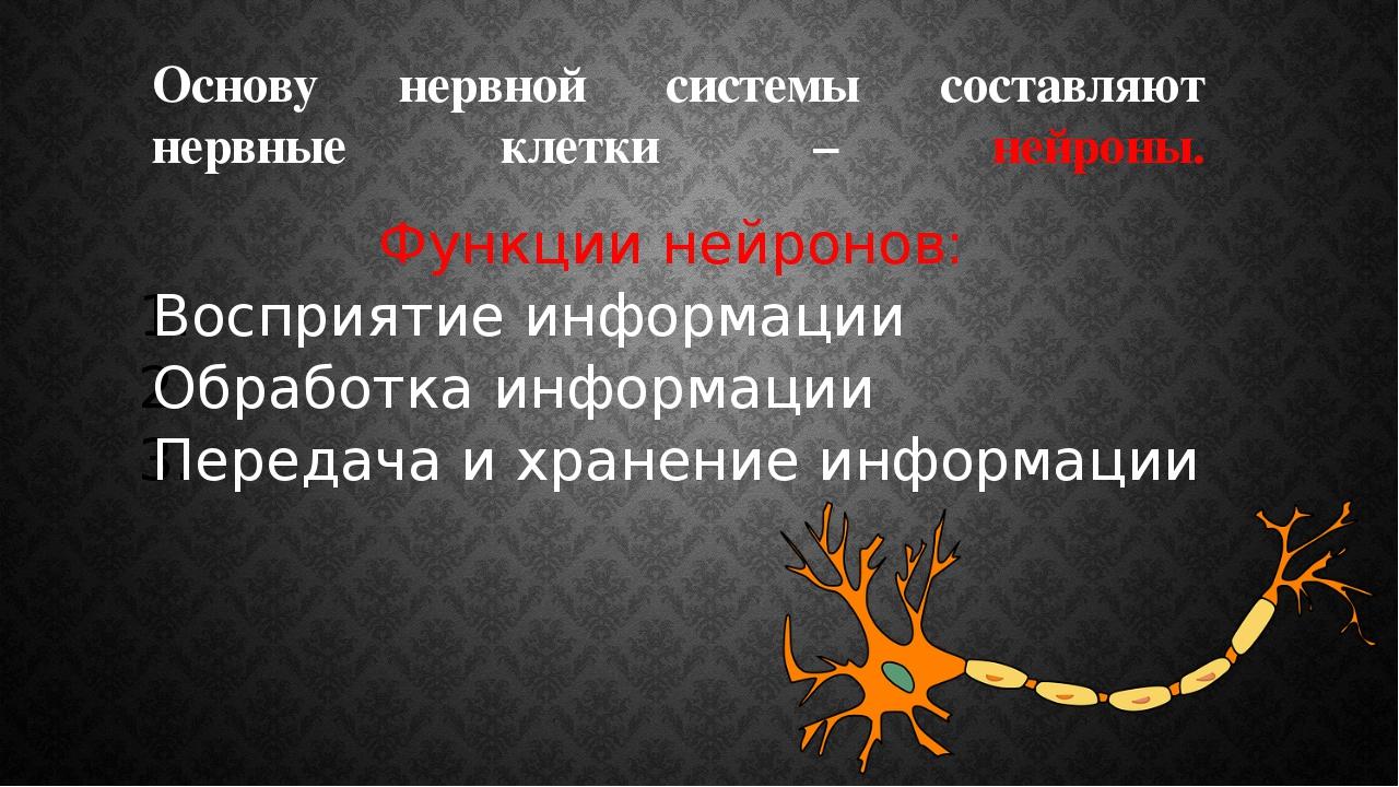 Основу нервной системы составляют нервные клетки – нейроны. Функции нейронов:...