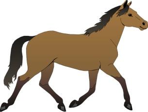 http://amamam.ru/wp-content/uploads/2013/11/horse_5.jpg