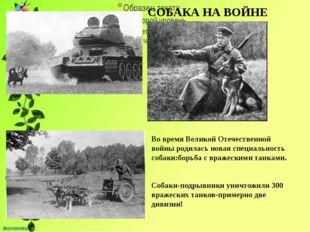 СОБАКА НА ВОЙНЕ Во время Великой Отечественной войны родилась новая специаль