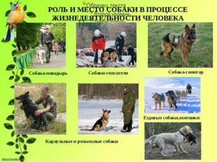 РОЛЬ И МЕСТО СОБАКИ В ПРОЦЕССЕ ЖИЗНЕДЕЯТЕЛЬНОСТИ ЧЕЛОВЕКА Собака-поводырь Со