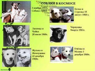 СОБАКИ В КОСМОСЕ 3 ноября 1957г. Собака Лайка Лисичка и Чайка 28 июля 1960г.