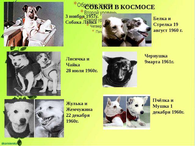 СОБАКИ В КОСМОСЕ 3 ноября 1957г. Собака Лайка Лисичка и Чайка 28 июля 1960г....