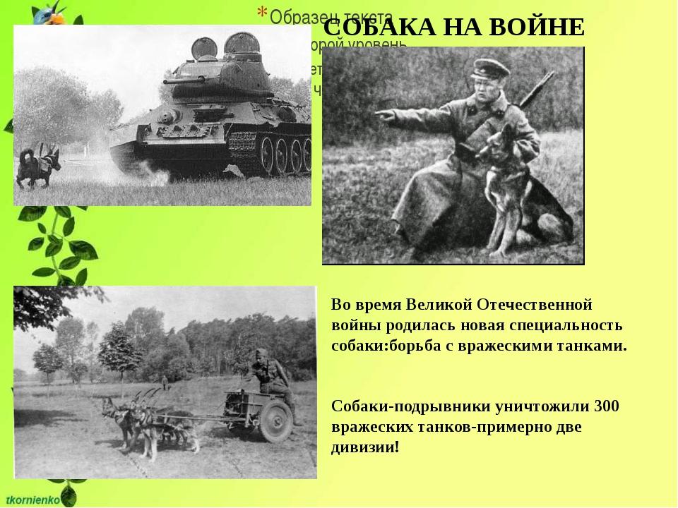 СОБАКА НА ВОЙНЕ Во время Великой Отечественной войны родилась новая специаль...