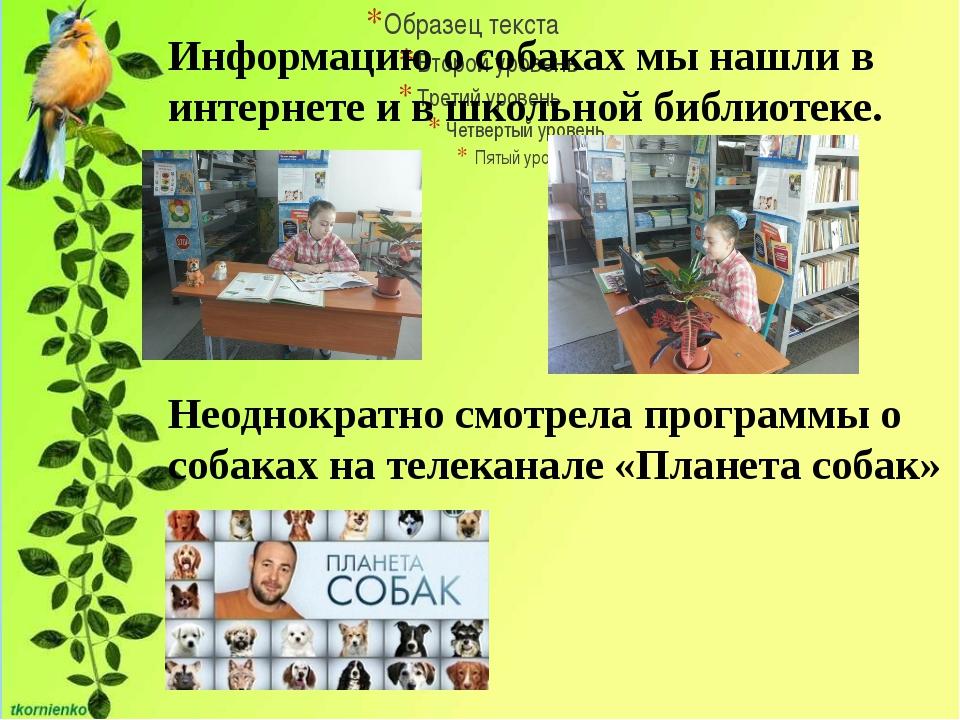 Информацию о собаках мы нашли в интернете и в школьной библиотеке. Неоднокра...