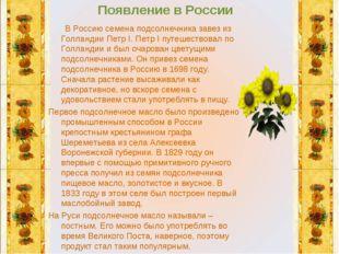 Появление в России В Россию семена подсолнечника завез из Голландии Петр I. П