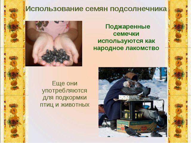 Использование семян подсолнечника Поджаренные семечки используются как народн...