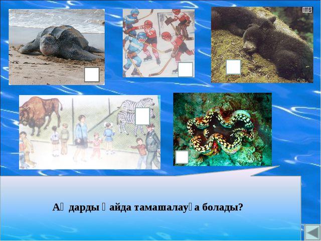 Аңдарды қайда тамашалауға болады? морской паук