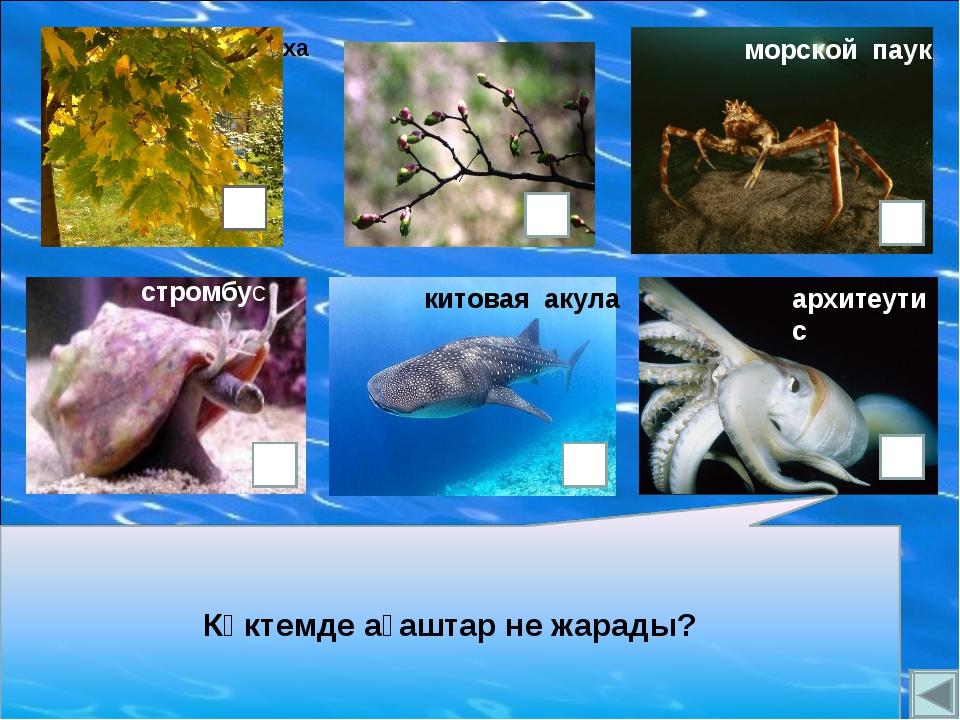 китовая акула архитеутис стромбус морской паук кожистая черепаха
