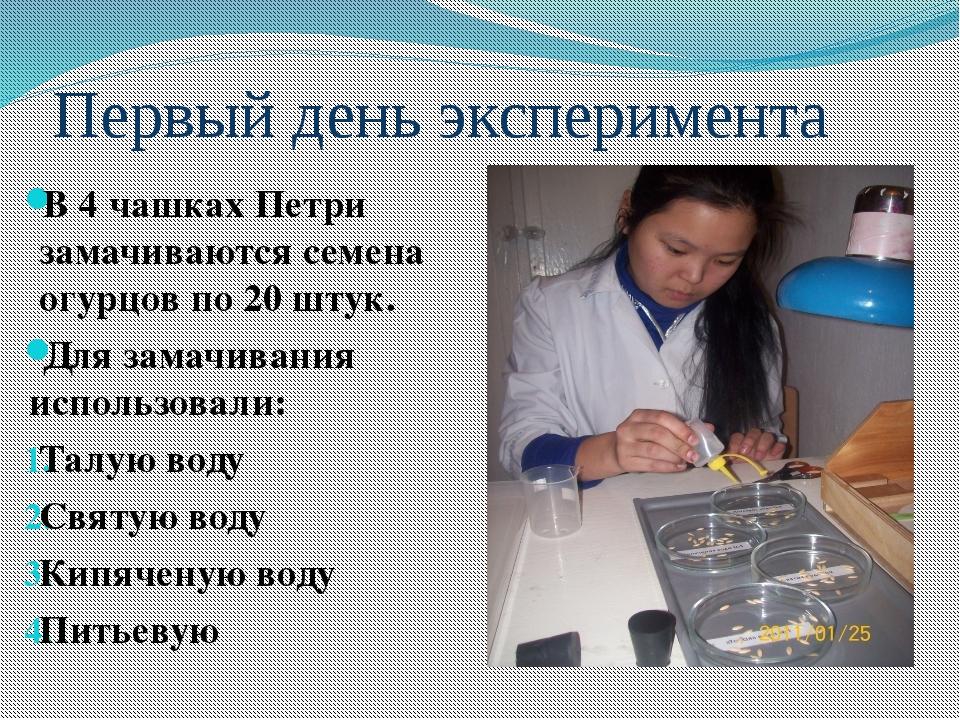 Первый день эксперимента В 4 чашках Петри замачиваются семена огурцов по 20 ш...