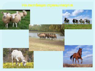 Население Основное население - казахи Русские Узбеки Украинцы Уйгуры Татары Н