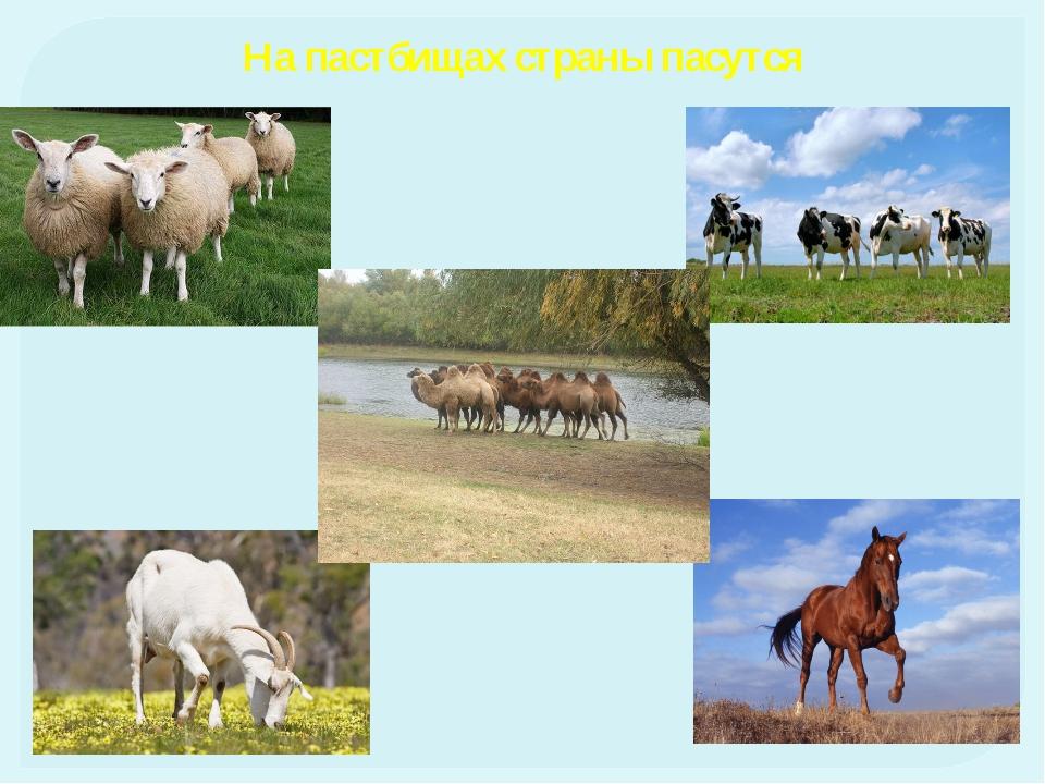Население Основное население - казахи Русские Узбеки Украинцы Уйгуры Татары Н...