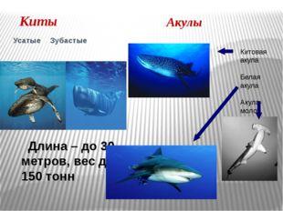 Киты Усатые Зубастые Длина – до 30 метров, вес до 150 тонн Акулы Китовая аку