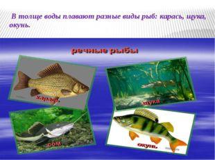 В толще воды плавают разные виды рыб: карась, щука, окунь.