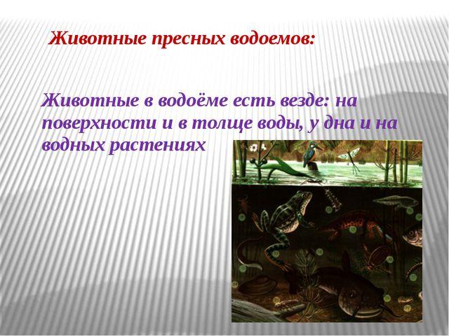 Животные пресных водоемов: Животные в водоёме есть везде: на поверхности и в...