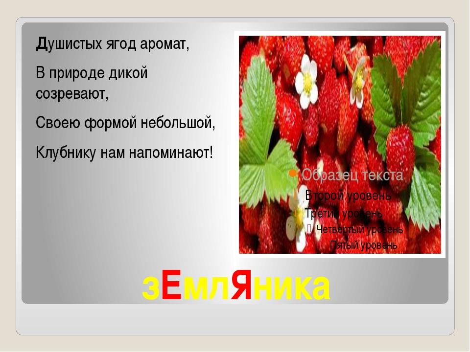 зЕмлЯника Душистых ягод аромат, В природе дикой созревают, Своею формой небол...