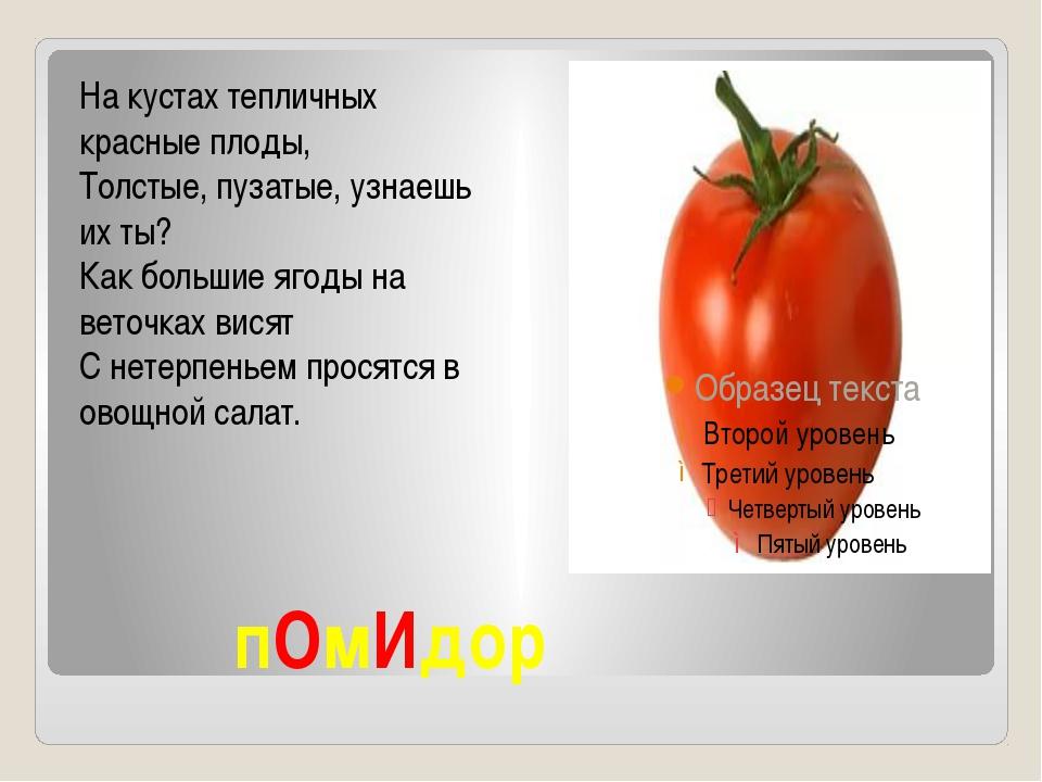 пОмИдор На кустах тепличных красные плоды, Толстые, пузатые, узнаешь их ты?...