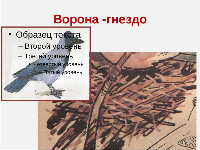 Ворона -гнездо