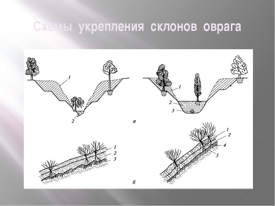 Схемы укрепления склонов оврага