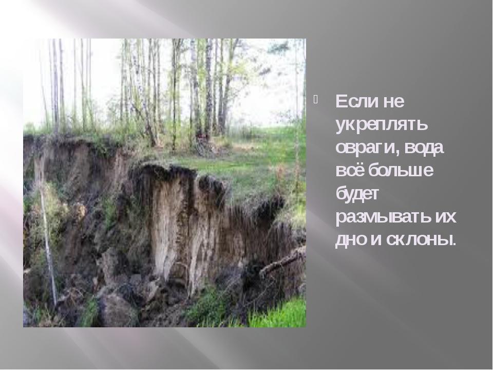 Если не укреплять овраги, вода всё больше будет размывать их дно и склоны.