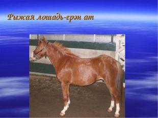 Рыжая лошадь-ерән ат