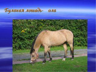 Буланая лошадь-ҡола