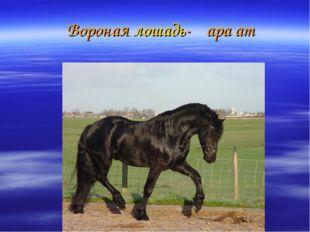 Вороная лошадь-ҡара ат