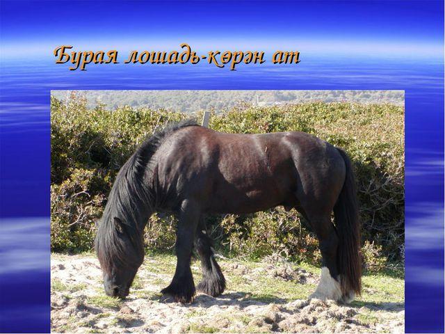Бурая лошадь-көрән ат