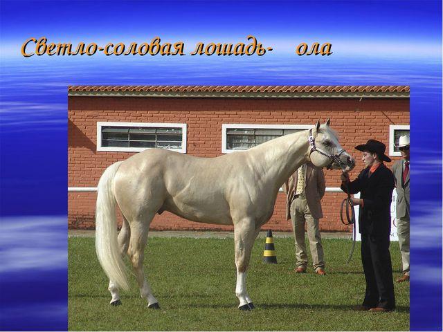 Светло-соловая лошадь-ҡола