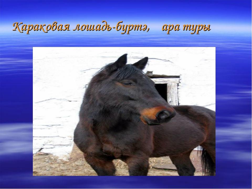 Караковая лошадь-бүртә,ҡара туры