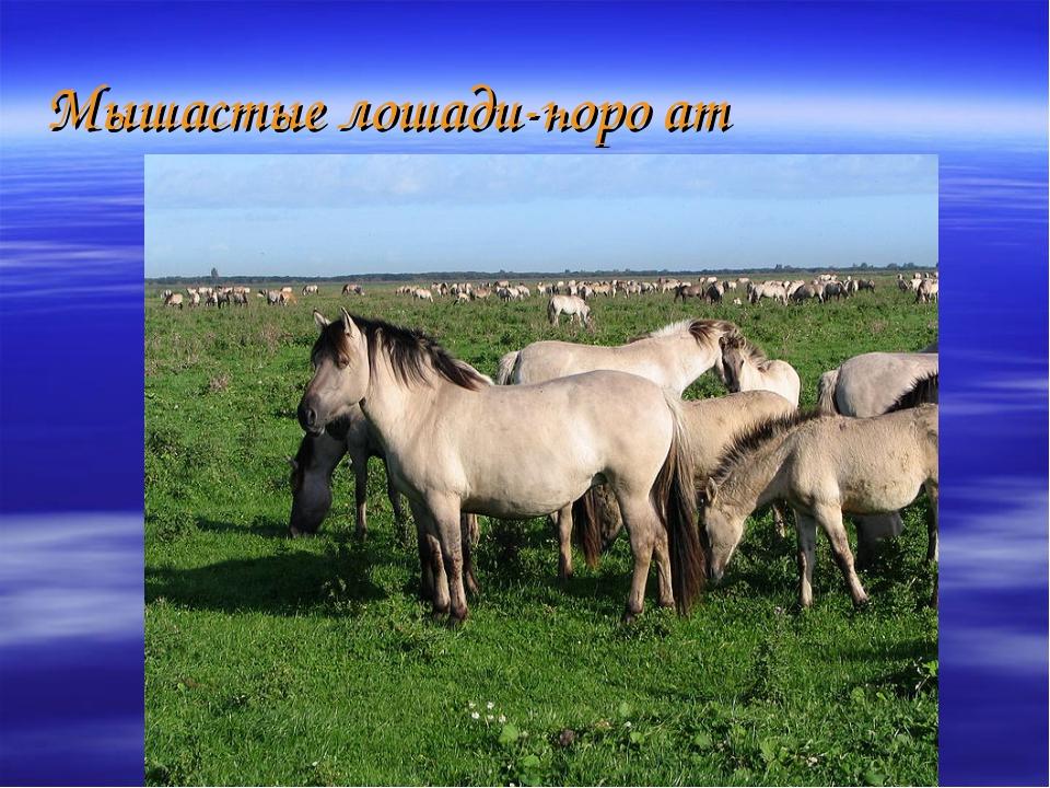 Мышастые лошади-һоро ат