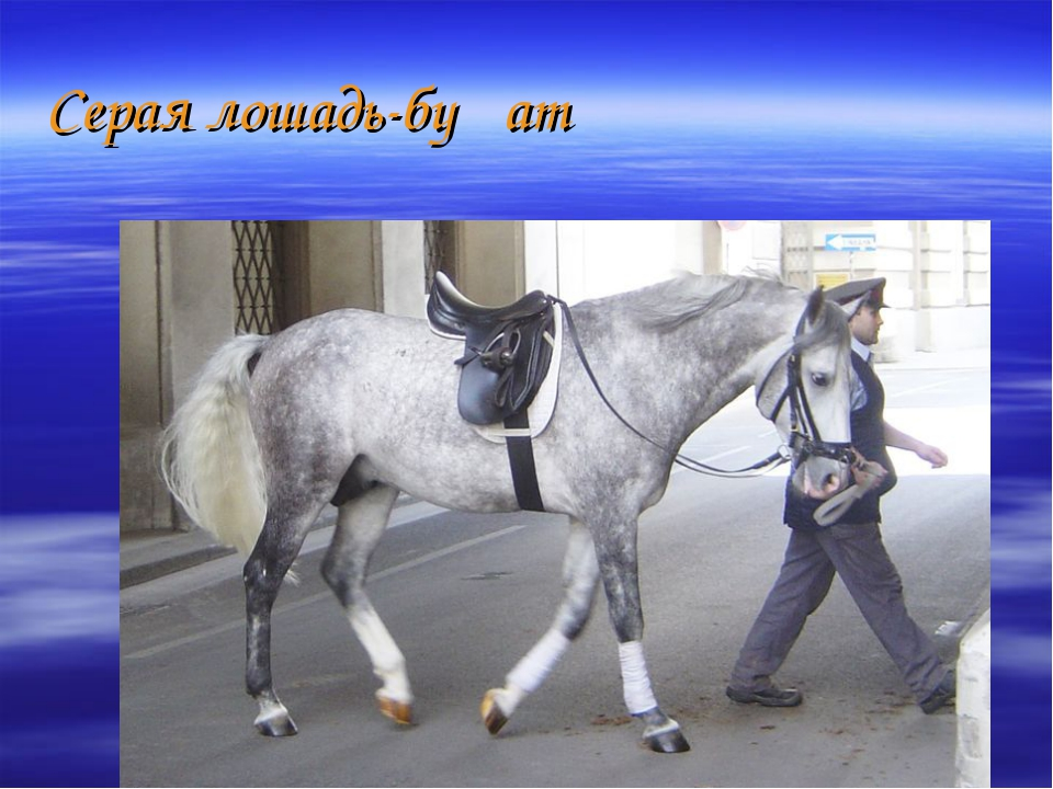 Серая лошадь-буҙ ат